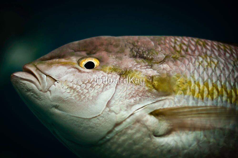 Fisheye by EdwardKay