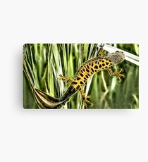 Wild nature - reptile #2 Canvas Print