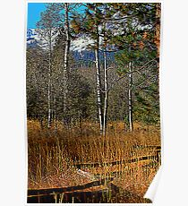 Split Rail Fence Poster