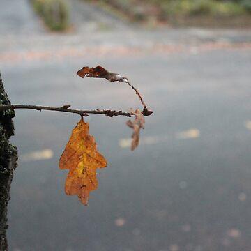 Lonely Leaf by NebTheThird