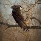 Where Eagles Dare by Jeff Weymier