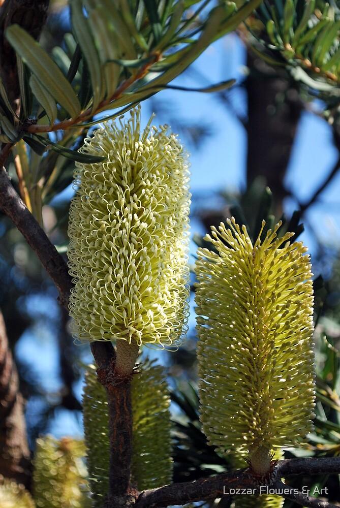 Banksia in the Bush by Lozzar Flowers & Art