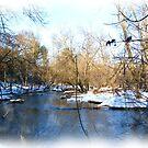 Winter Scene from Wisconsin by VJSheldon