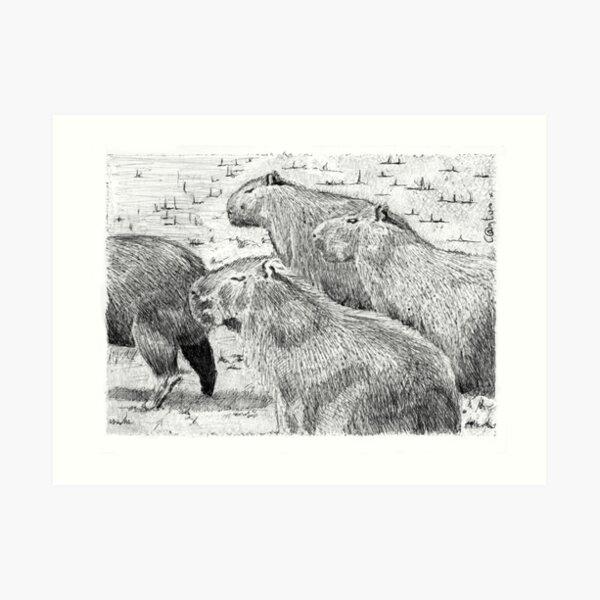 A capybara group (Hydrochoerus hydrochaeris) Art Print