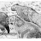 A capybara group (Hydrochoerus hydrochaeris) by Cantus