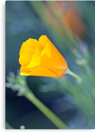 One Little Poppy by jayneeldred