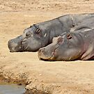 Happy Hippo Couple by EdPettitt