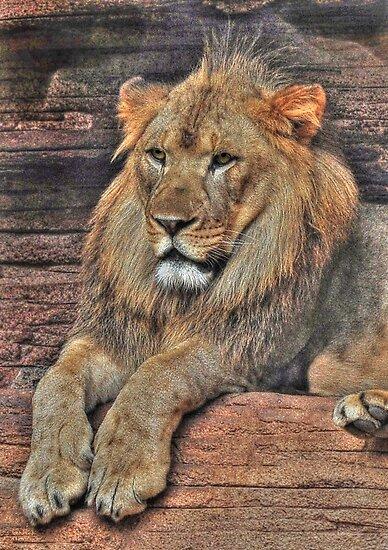 I Am KING by Kathy Baccari