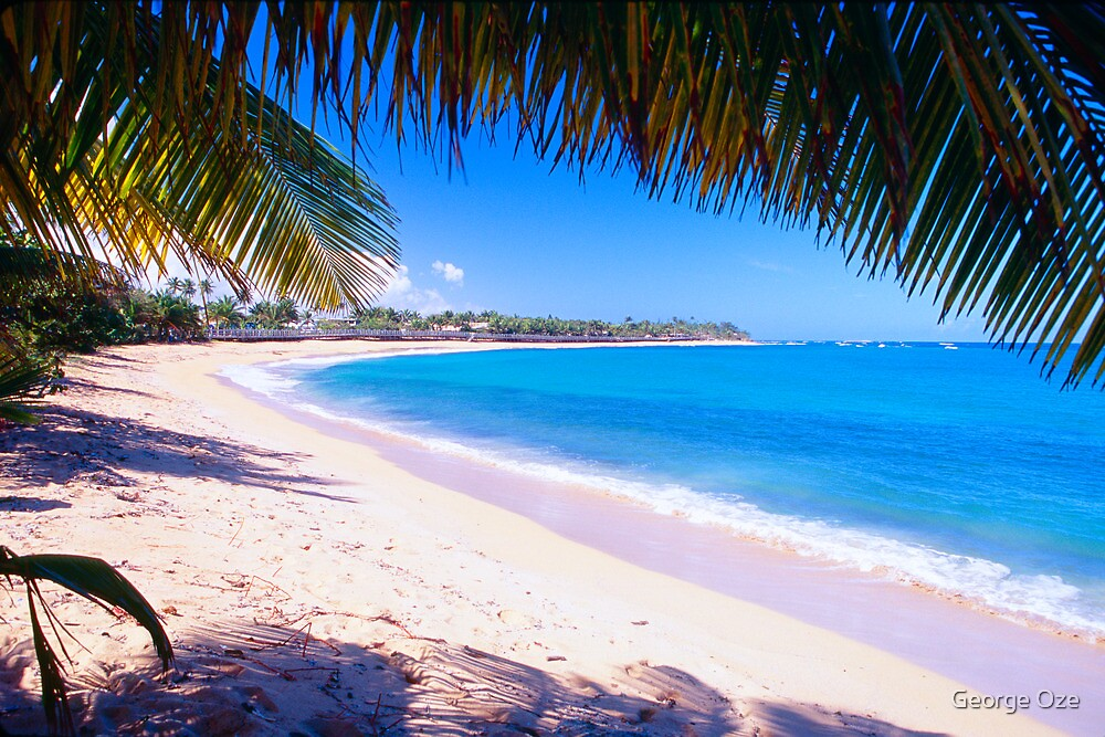 Beach View Under a Palm Tree by George Oze