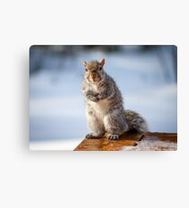 Posing for Peanuts Canvas Print