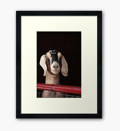 Hey Goat ! Framed Print