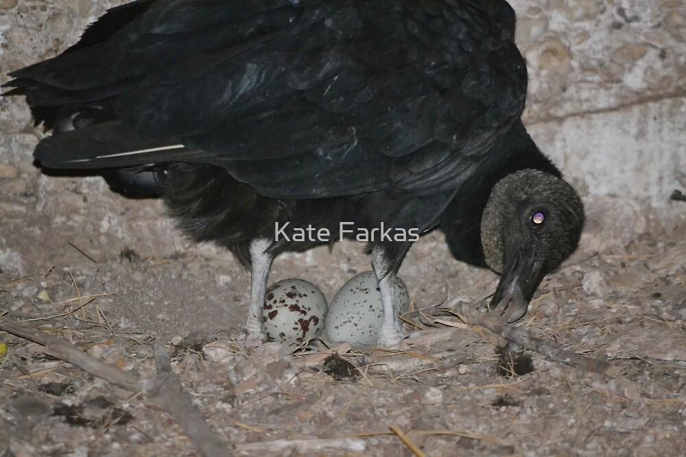 Black vulture in the Dunn main barn by Kate Farkas