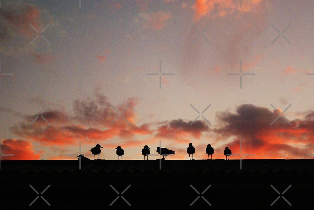 birds on a roof at sunset by kathybellingham