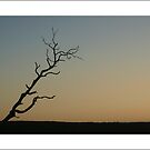 tree at sunset in Lilli Pilli by kathybellingham