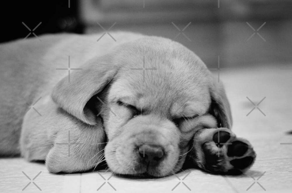 Sleepy Puppy  by rmcbuckeye