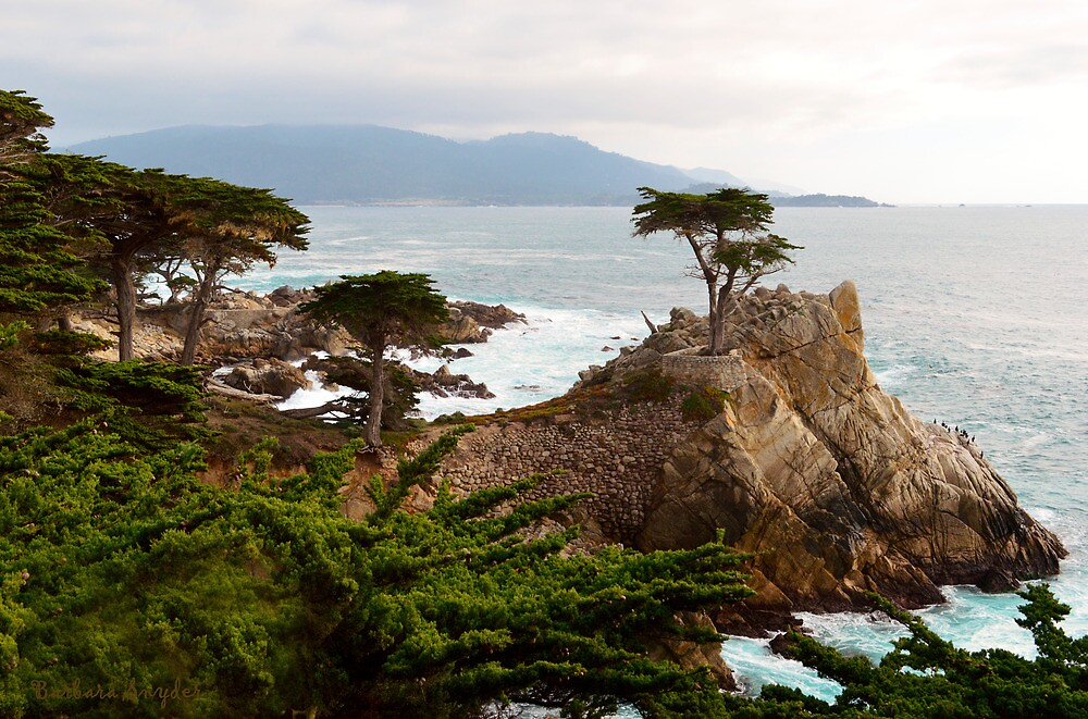 Lone Cypress Large by BarbaraSnyder