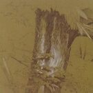The tree stump by frnkmurray