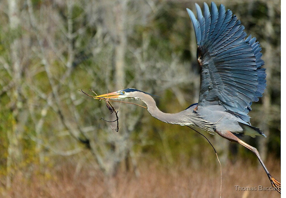 UP UP AND AWAY YIPPIE by TJ Baccari Photography