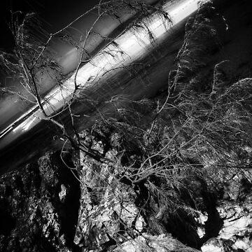 Survival... by debsphotos