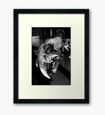 Sabre-toothed Cat Skull Framed Print