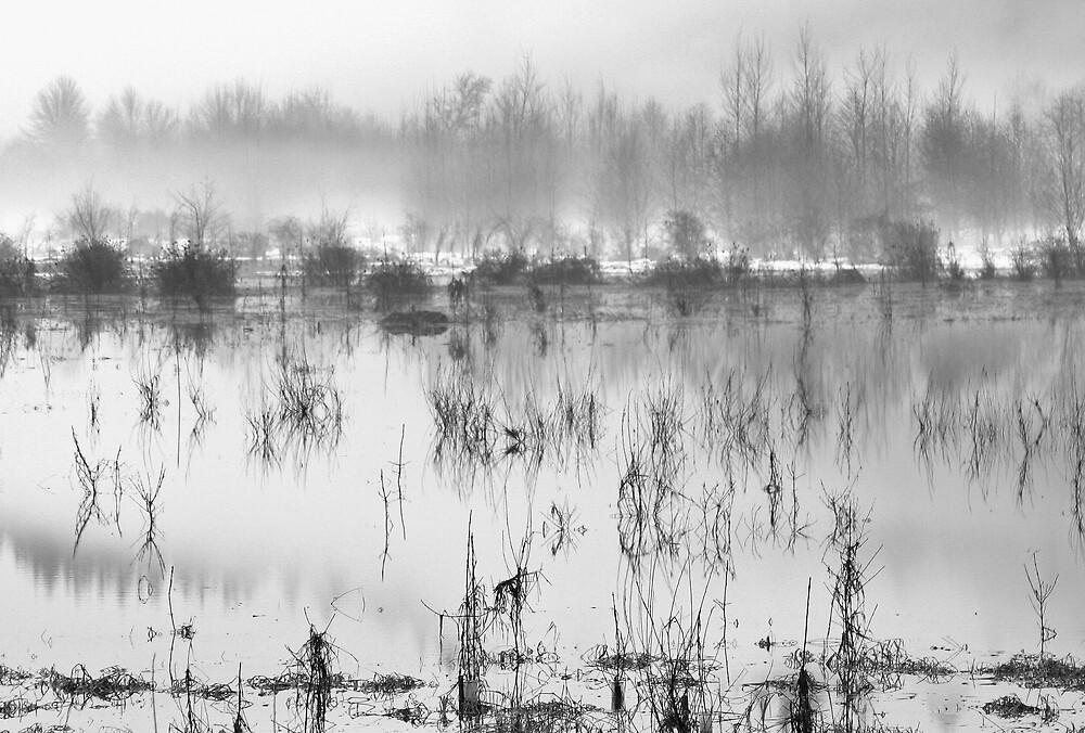 La-Center Creek at Flood by Randy Richards