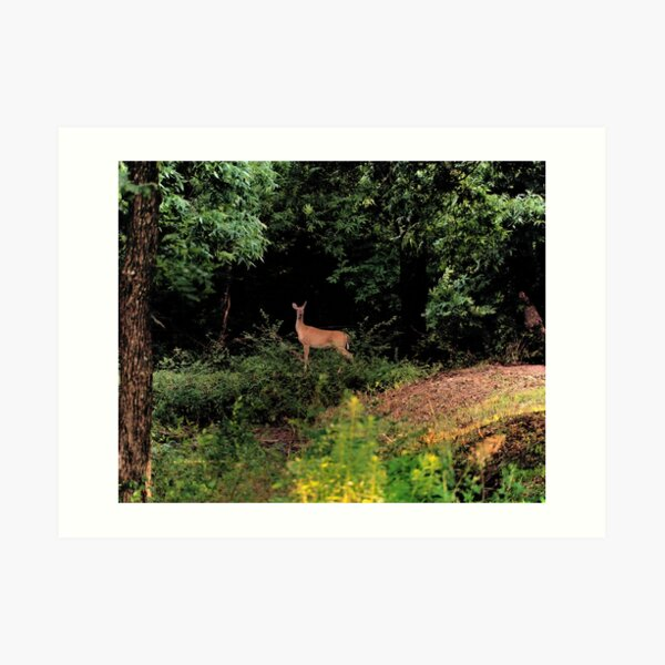Doe in the evening Art Print