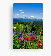 Wildflowers with Distant Snowy Mountains  Canvas Print