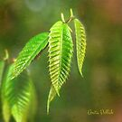 Baby Chestnut Leaves on a Painted Background by Anita Pollak