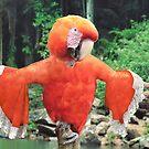 Baroque macaw by Felfriast