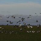Wild Geese by WildestArt