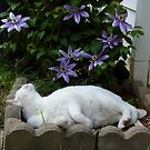 Cat In The Clematis by WildestArt