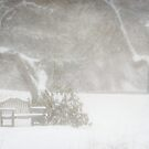 Snow still softly falling by Owed To Nature