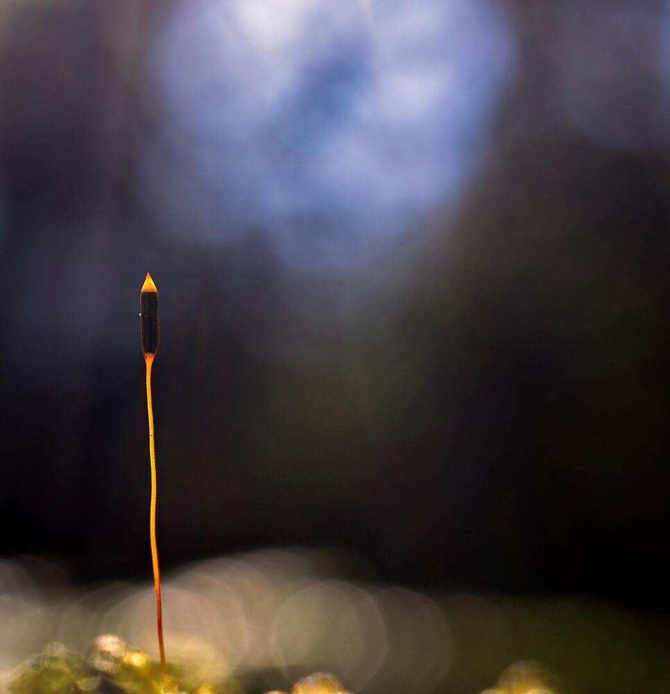 Moss Sporophyte by TheCopaceticEye