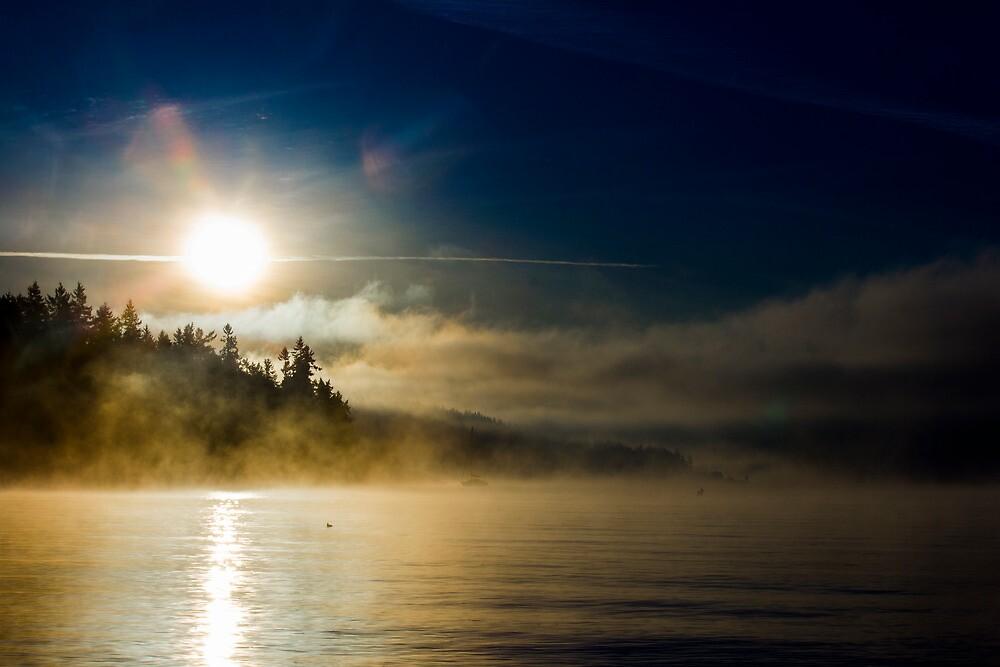 Fog by Will Rynearson