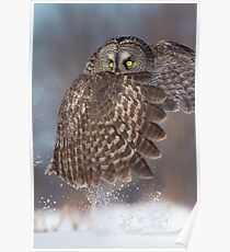 The Caped Crusader - Great Gray Owl. Poster