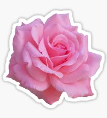 Pinke Rose Sticker