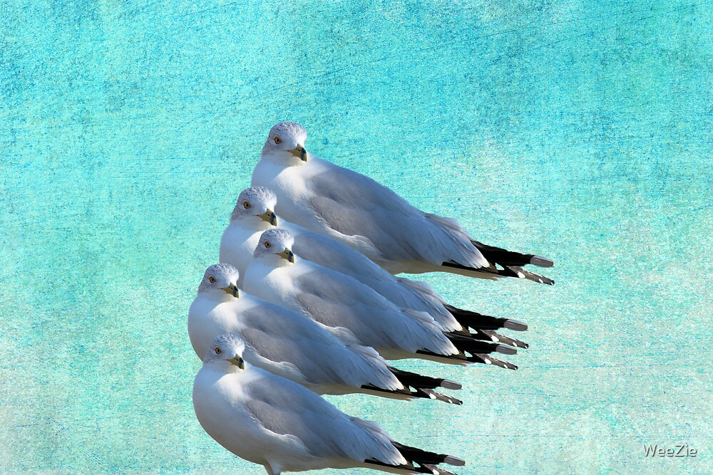 Stack of Sea Gulls by WeeZie