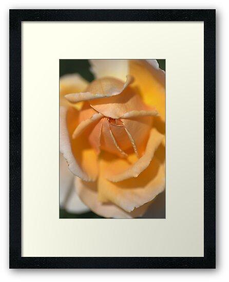 Glow in your Heart..... by Joy Watson