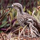 Bush Stone-curlew with Chick by naturalnomad