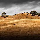 Sunburnt Hills by Mieke Boynton