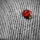 Luv Bug by Jamie Lee