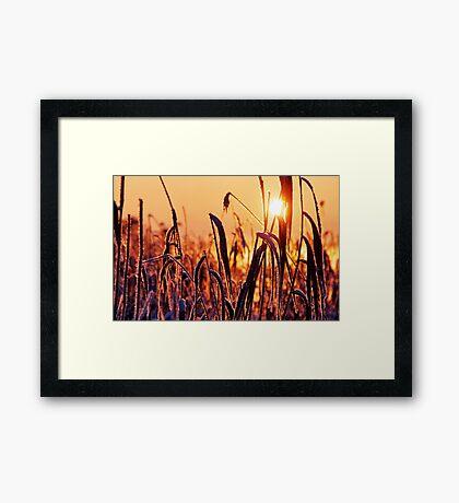The golden cold Framed Print