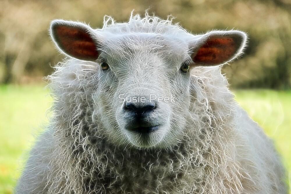 Ewe's Just Fluffy by Susie Peek