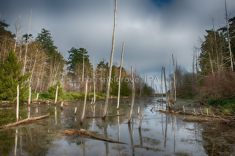 The Swamp on Cabbage Island by toby snelgrove  IPA
