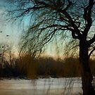 Nature's season © by Dawn Becker