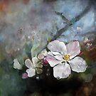 Appleblossom by Stephanie Köhl