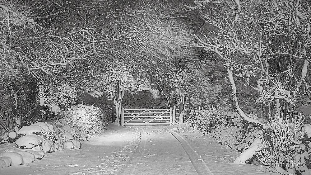 Winter Morning by Tim Haynes