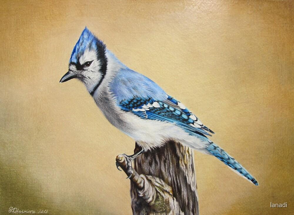 Blue Jay by lanadi