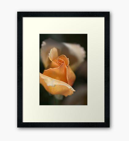 The Rose Bud Framed Print