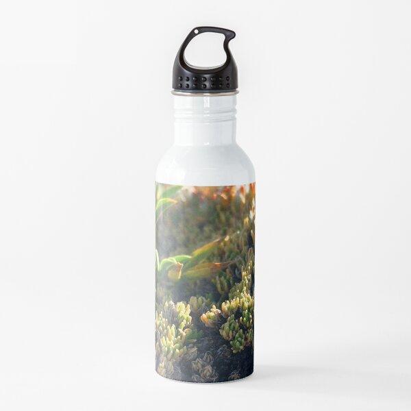 Watercolor Moss, Tundra Plants 01, RMNP, Colorado Water Bottle